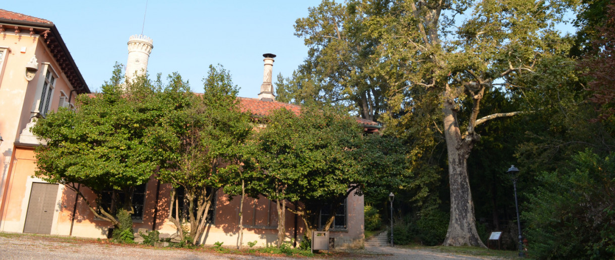 Il platano di Villa Mirabello