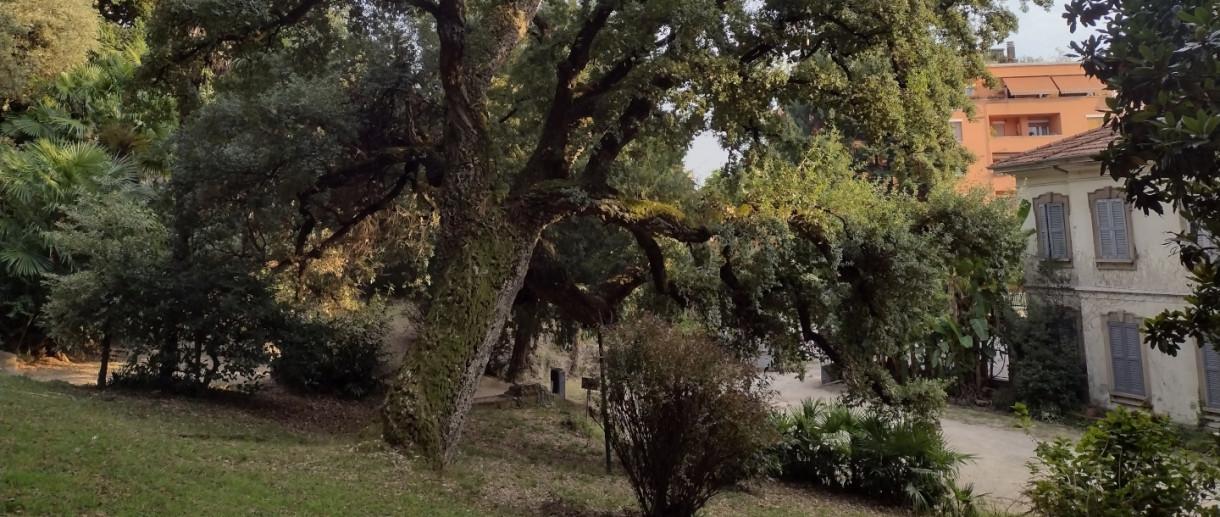 La Sughera di Villa Augusta