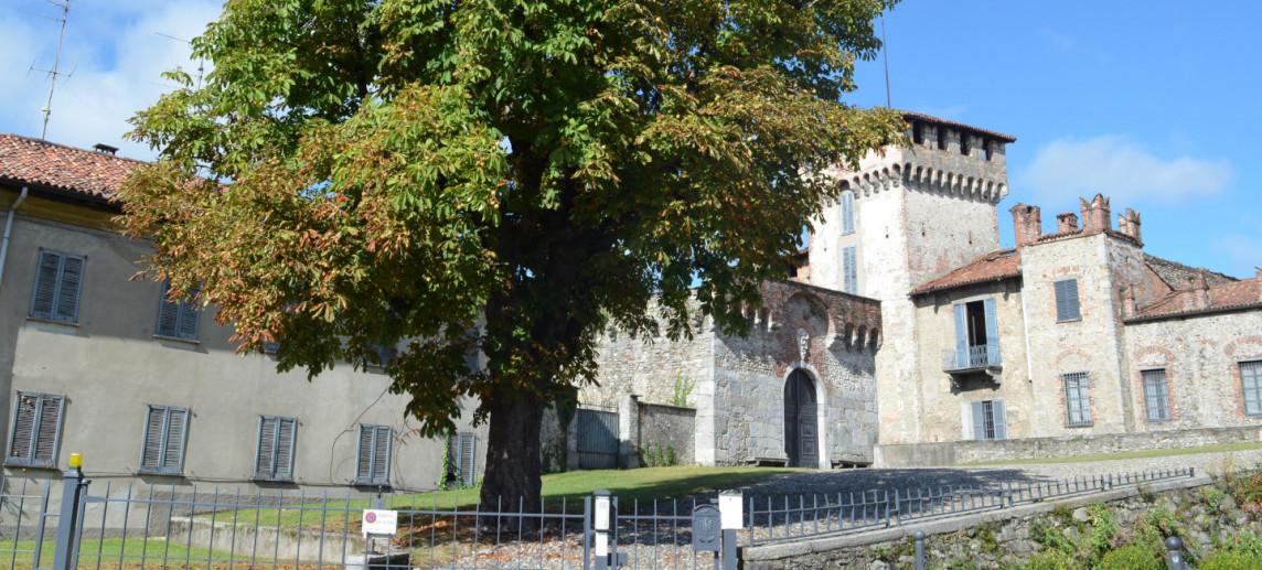 L'Ippocastano di Castello Visconti