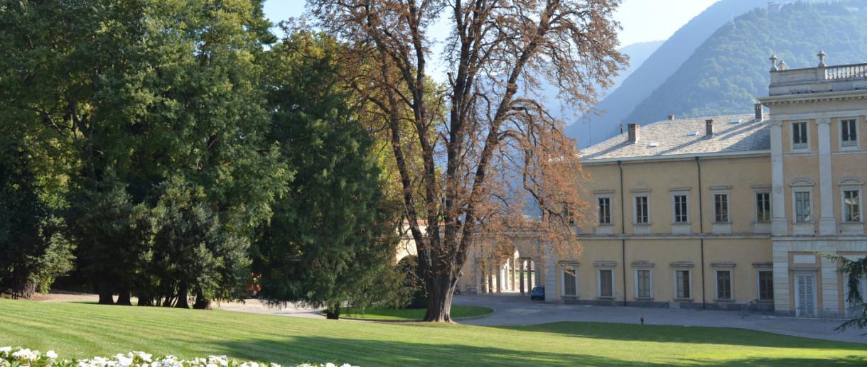 L'Ippocastano di Villa Olmo