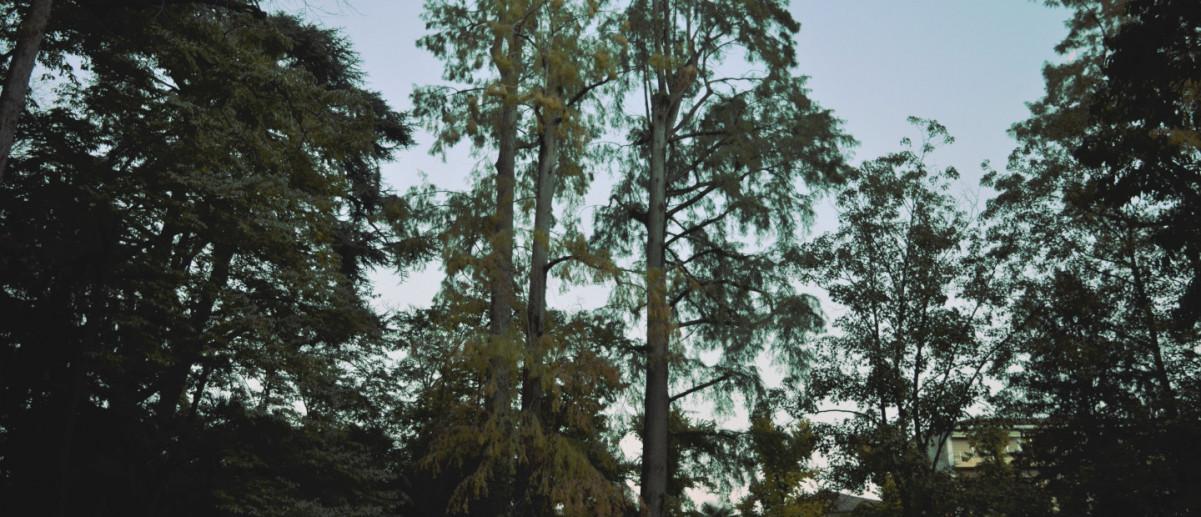 I Cipressi Calvi di Parco Marenzi