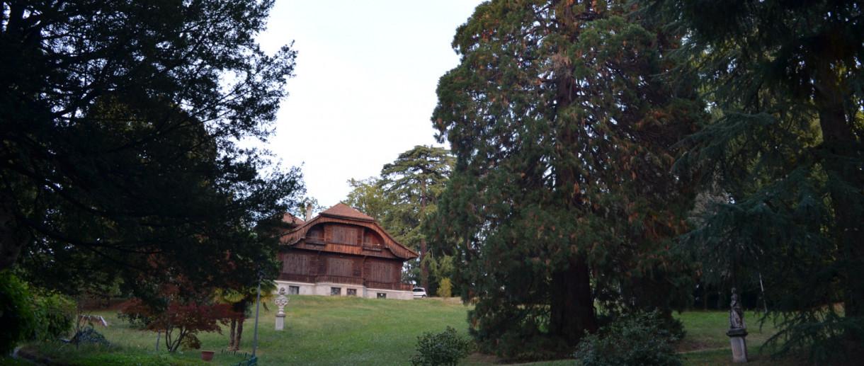La Sequoia di Villa Baragiola