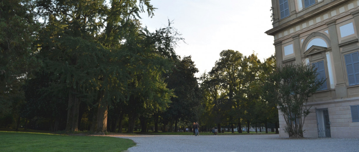 I Ginkgo biloba di Villa Reale
