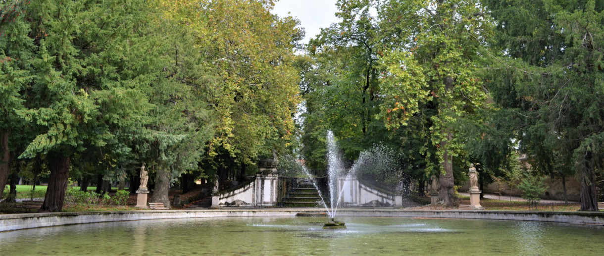 I Platani di Parco Borromeo