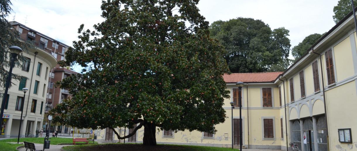 La Magnolia di Lissone