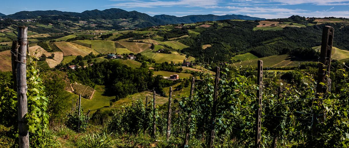 Vino in Valtellina - Val Chiavenna