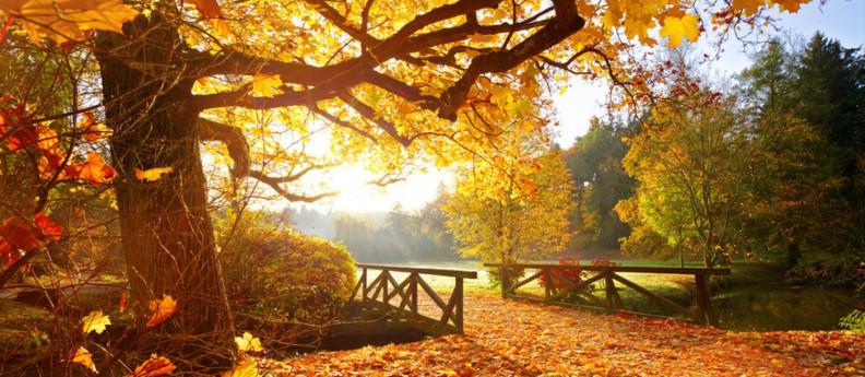 foliage_inlombardia