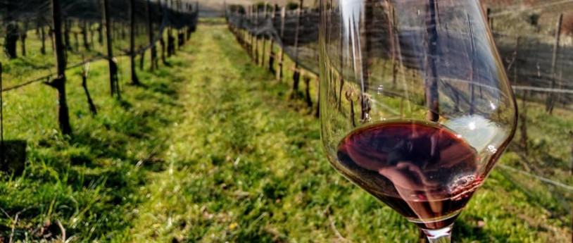 Dalla botte al vino