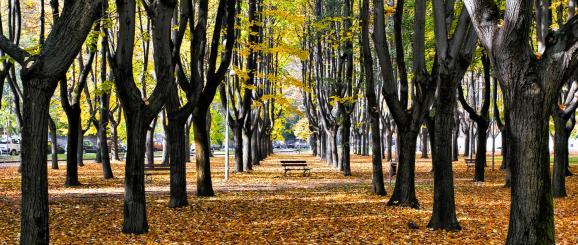 10 gute Gründe, um Monza zu besichtigen