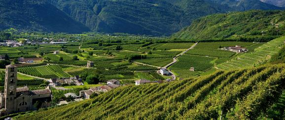 Vineyards in Sondrio in Valtellina