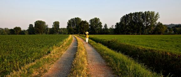 Le Chemin de Saint Colomban