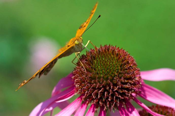 Gärten der Lombardei: Tipps für Sie