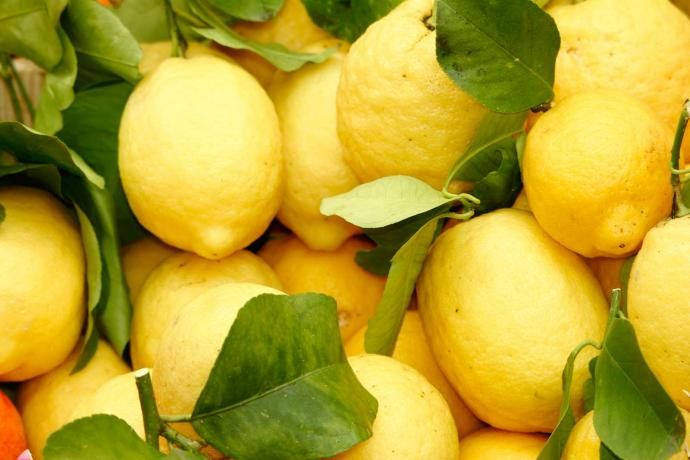 Lemons of Garda, renowned local products