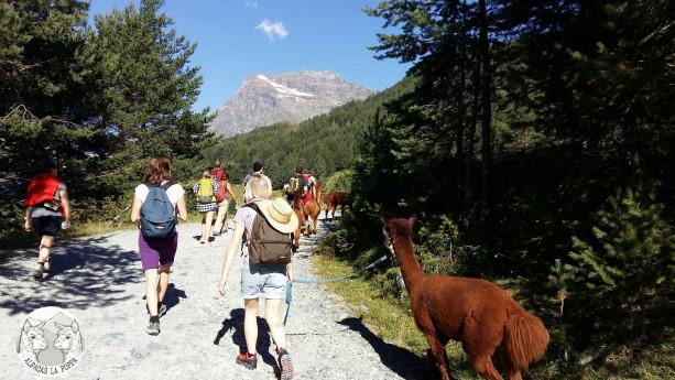 Escursioni con Alpaca