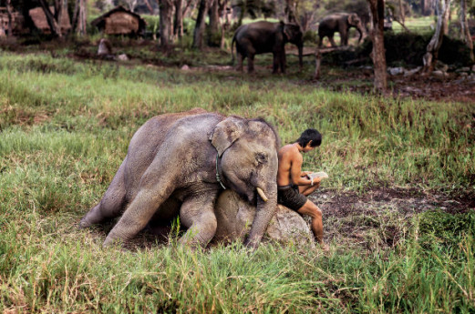 Steve McCurry: Animals
