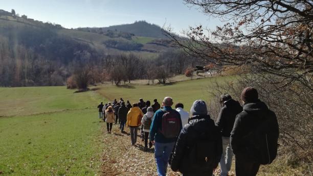 Il salice delle vigne sulle colline di Godiasco