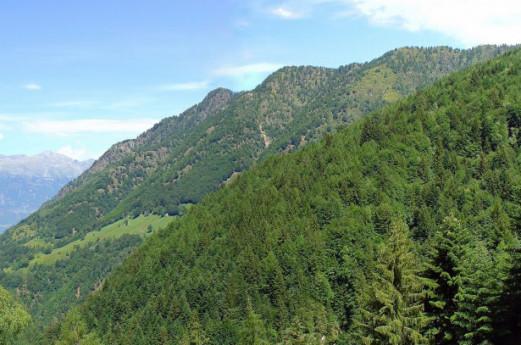 Carta delle Foreste di Lombardia