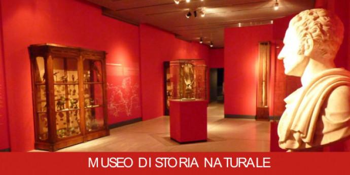 Dal territorio al museo - un PO di natura: visite guidate al Museo di Storia Naturale
