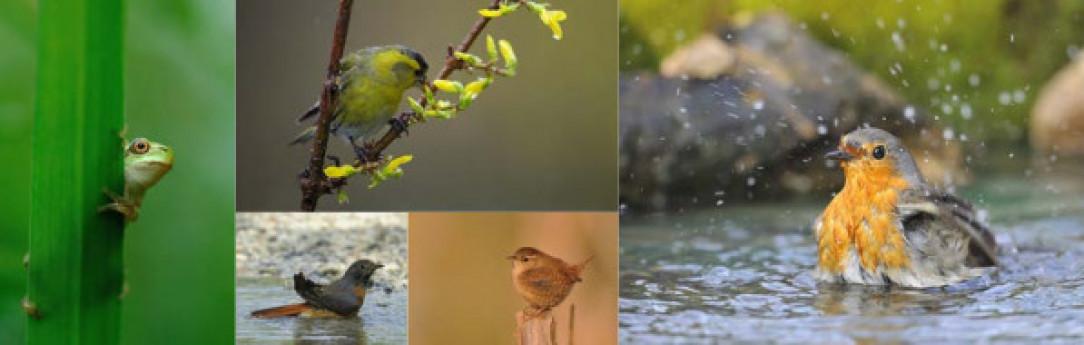 Dal museo al territorio - un PO di natura lungo il fiume: visite guidate lungo il fiume