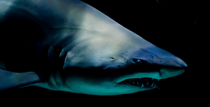 Mostra squali prorogata al 17 gennaio 2021