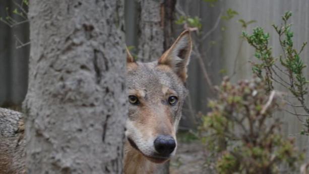 Sulle Tracce dei Selvatici e del Lupo in Oltrepò