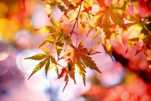 I colori d'autunno al giardino d'atmosfera