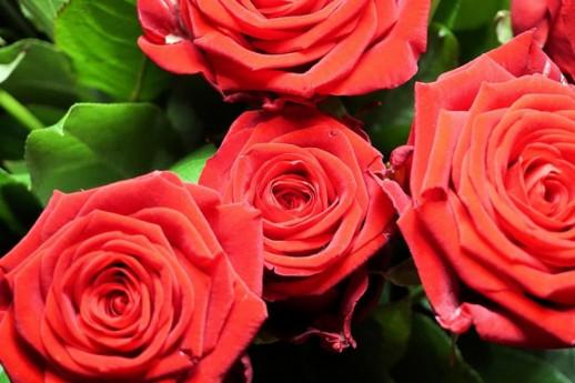 La Rosa complice dei secoli e dell'amore