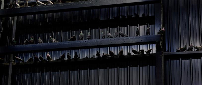"""Mostra di Maurizio Cattelan: """"Breath Ghosts Blind"""""""