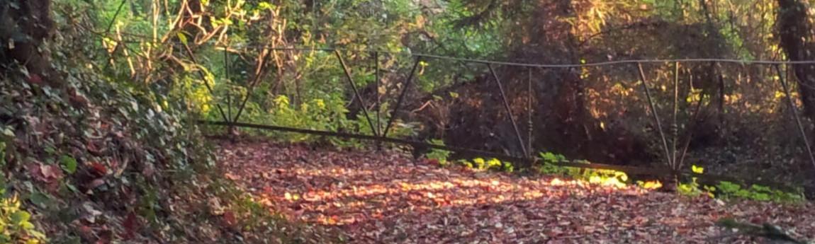 Mandala nel bosco, laboratorio di creatività green