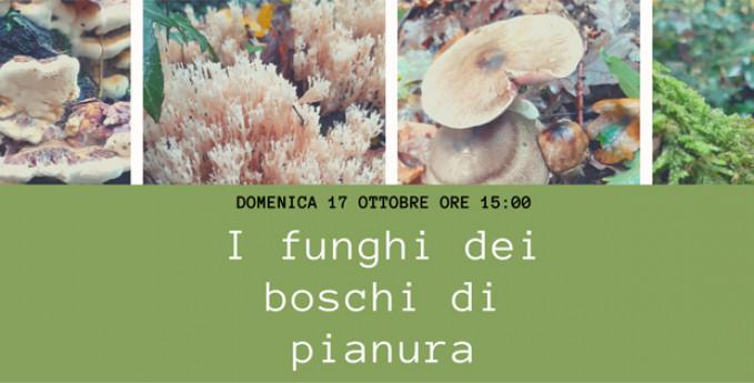 I funghi dei boschi di pianura