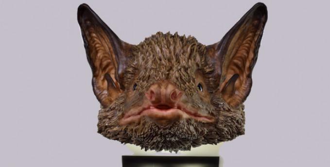 Bat Talks, 15 minuti con i pipistrelli