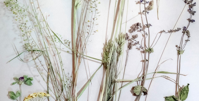 Sistemi variabili: Fotografia e biodiversità