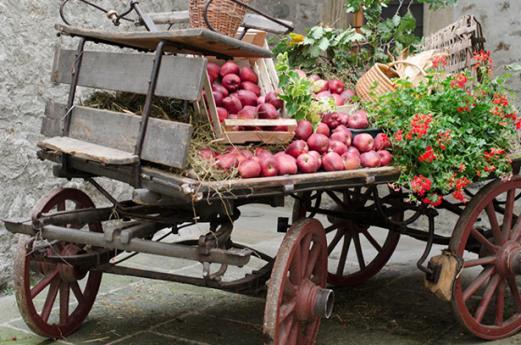 Sagra della mela e dell'uva