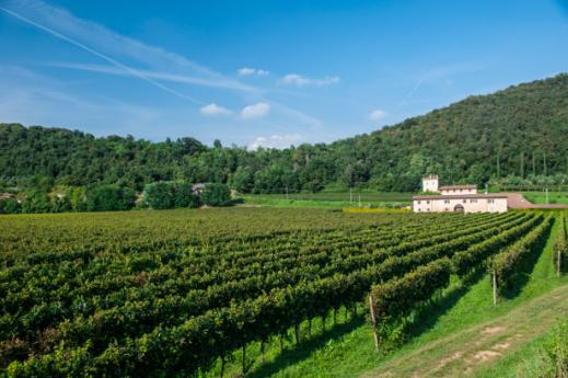 What to do In Franciacorta