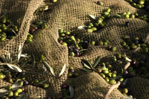 Olio del Garda, prodotti tipici Lombardia
