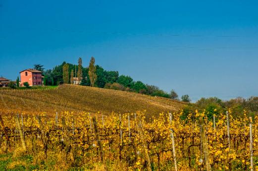 Wine and Flavor Trail in Oltrepò Pavese, history taste and traditions