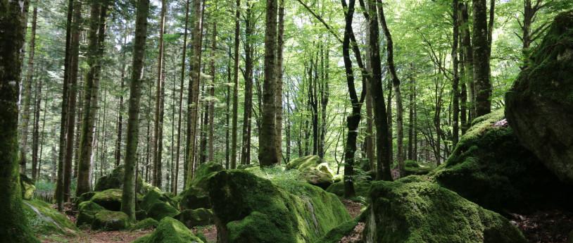 Val Masino, cuore selvaggio delle Retiche