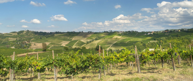 The grape harvest in Lombardy