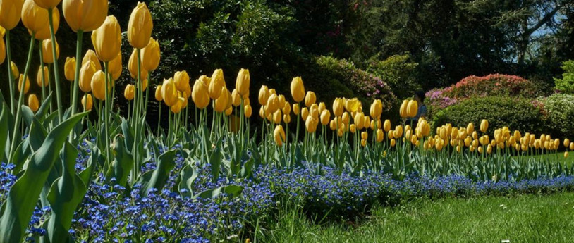 Parchi e giardini da scoprire online