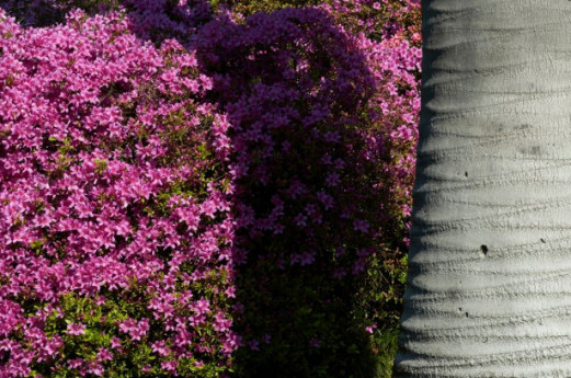 Villa Carlotta: adotta una pianta, salva la bellezza