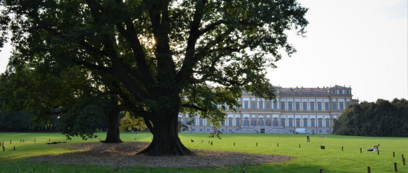 Viaggio tra i 10 alberi più rappresentativi della Provincia di Monza e Brianza