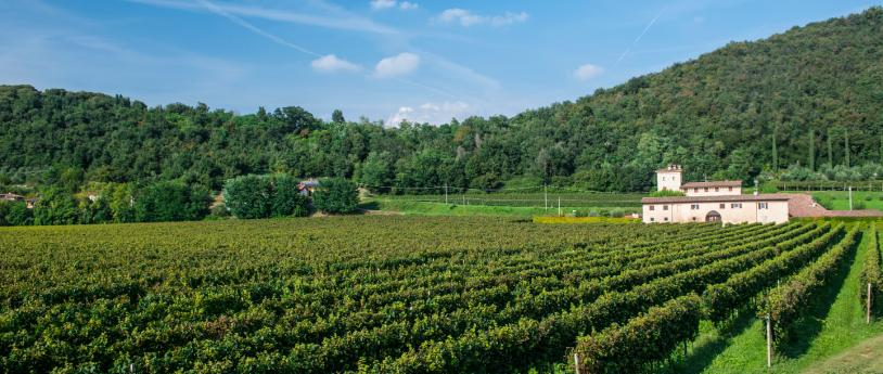 Franciacorta, a land of excellence