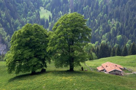 Parco dell'Alto Garda Bresciano