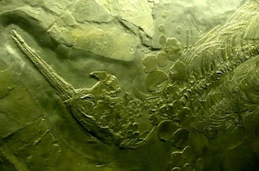 Besano's Fossils Civic Museum, the times of sea in Varese