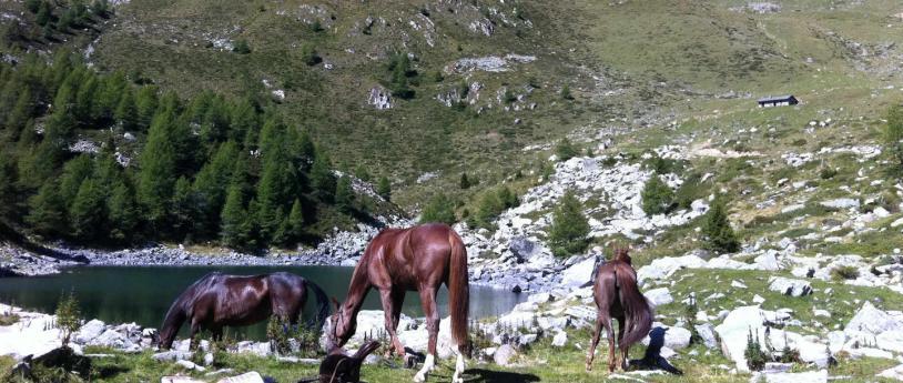 A cavallo in Lombardia