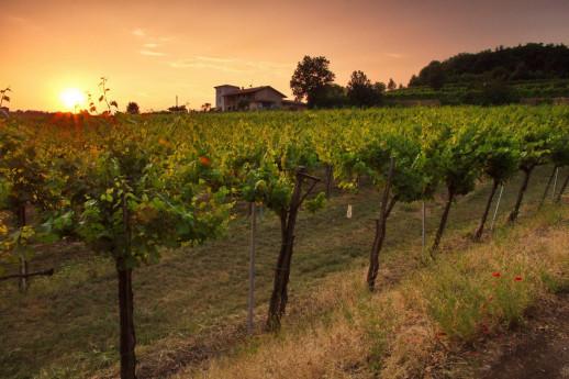 Franciacorta tra territorio, vino e passione famigliare