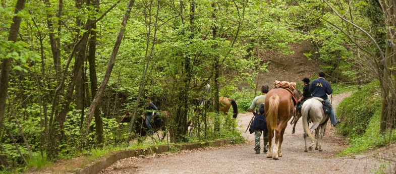 Passeggiata a Cavallo con degustazione