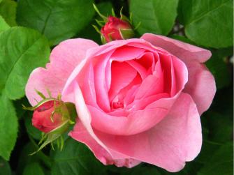 Camminata in rosa