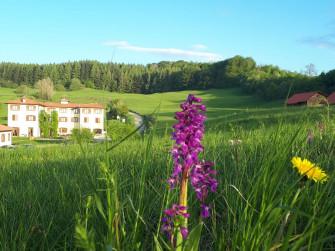 In viaggio tra le fioriture spontanee, orchidee e non solo