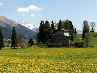 La Clusone Rurale e la fioritura del Tarassaco officinale
